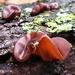 Hongos de Oreja - Photo (c) Katy Wang, algunos derechos reservados (CC BY-NC)