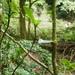 Besleria robusta - Photo (c) wherenextnyc, algunos derechos reservados (CC BY-NC)