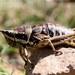 Monistria - Photo (c) FroggyBeth, μερικά δικαιώματα διατηρούνται (CC BY-NC-SA)