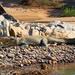 Crocodylus niloticus - Photo (c) c michael hogan,  זכויות יוצרים חלקיות (CC BY-NC)