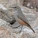 Saltapared de Rocas - Photo (c) Jerry Oldenettel, algunos derechos reservados (CC BY-NC-SA)