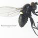 Hydrelliinae - Photo (c) Stephen Thorpe, algunos derechos reservados (CC BY-NC)
