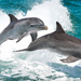 Common Bottlenose Dolphin - Photo (c) zschmolka, some rights reserved (CC BY-NC)