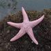 Estrellas de Mar - Photo (c) Jerry Kirkhart, algunos derechos reservados (CC BY)