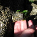 Giant Rock Barnacle - Photo (c) Peter Poortman, some rights reserved (CC BY-NC)