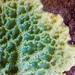 Halichondria panicea - Photo (c) Ken-ichi Ueda,  זכויות יוצרים חלקיות (CC BY)