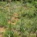 Aloe zebrina - Photo (c) Andrew Hankey, algunos derechos reservados (CC BY-SA)