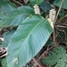Calathea - Photo (c) botanicalkatz, some rights reserved (CC BY-NC)