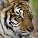 Felidae - Photo (c) Jeffrey Rolinc, μερικά δικαιώματα διατηρούνται (CC BY-NC-ND)