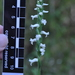 Niklas' Ladies' Tresses - Photo (c) matthewpace, some rights reserved (CC BY-NC)