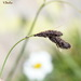 Carex medwedewii - Photo (c) vlad50, some rights reserved (CC BY-NC)