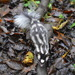 Southern Spotted Skunk - Photo (c) Alberto Lozano, some rights reserved (CC BY-NC)
