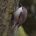 Short-toed Treecreeper - Photo (c) Ina Siebert, some rights reserved (CC BY-NC)