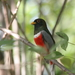Trogons and Quetzals - Photo (c) Emily Hoyer, some rights reserved (CC BY-NC-ND)