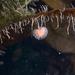 Sycozoa gaimardi - Photo (c) Gonzalo Bravo,  זכויות יוצרים חלקיות (CC BY-NC)