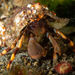 Common Hermit Crab - Photo (c) Gonzalo Bravo, some rights reserved (CC BY-NC)