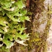 Lung Lichens - Photo (c) earthysaltling, some rights reserved (CC BY-NC)
