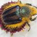 Escarabajos - Photo (c) Felix Riegel, algunos derechos reservados (CC BY-NC)