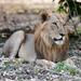 León de Norte - Photo (c) pfaucher, algunos derechos reservados (CC BY-NC)
