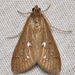 White-spotted Brown - Photo (c) John Morgan, some rights reserved (CC BY-NC)