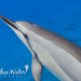 Spinner Dolphin - Photo (c) Kimberly Tripp Randal, some rights reserved (CC BY-NC)