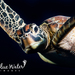 Typical Sea Turtles - Photo (c) Kimberly Tripp Randal, some rights reserved (CC BY-NC)