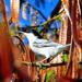 Dryoscopus cubla - Photo (c) Ian White, alguns direitos reservados (CC BY-ND)