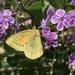 Isoca de la Alfalfa - Photo (c) magdam, algunos derechos reservados (CC BY-NC)