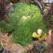 Cladophorales - Photo Ningún derecho reservado