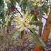 Pacific Madrone - Photo (c) kassondra, some rights reserved (CC BY-NC)