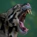 Ocelotes, Tigrillos Y Parientes - Photo (c) Sam Sam, algunos derechos reservados (CC BY)