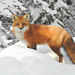 Red Fox - Photo (c) Joanne Redwood, some rights reserved (CC BY-NC)