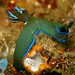 Gloomy Nudibranch - Photo (c) Steve Childs, some rights reserved (CC BY)