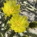 Cylindropuntia tesajo - Photo (c) Erik, some rights reserved (CC BY-NC)