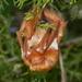 Murciélago Cola Peluda Rojizo - Photo (c) Matthew O'Donnell, algunos derechos reservados (CC BY-NC-SA)