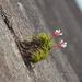 Anoplophytum - Photo (c) deboas, algunos derechos reservados (CC BY)