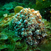 Carminodoris armata - Photo (c) crawl_ray, algunos derechos reservados (CC BY-NC)