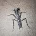 Liturgusid Mantises - Photo (c) Nuno Simoes, some rights reserved (CC BY-NC)