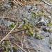 Sphagnum platyphyllum - Photo (c) Tom Neily, algunos derechos reservados (CC BY-NC)