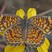 Mariposa Luna Naranja - Photo (c) Jerry Oldenettel, algunos derechos reservados (CC BY-NC-SA)