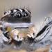 Habronattus tuberculatus - Photo (c) Marshal Hedin, algunos derechos reservados (CC BY-NC-SA)