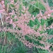 Tamarix chinensis - Photo (c) luckat,  זכויות יוצרים חלקיות (CC BY-NC)