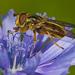Ferdinandea cuprea - Photo (c) Anne SORBES, algunos derechos reservados (CC BY-NC-SA), uploaded by Anne Sorbes