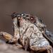 Cicada - Photo (c) Pavel Trhoň, μερικά δικαιώματα διατηρούνται (CC BY-NC)