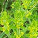 Crosswort - Photo (c) dirkpetersmann, some rights reserved (CC BY-NC)