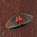 Virbia laeta - Photo (c) Aaron Carlson, algunos derechos reservados (CC BY), uploaded by aarongunnar
