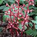 Orquídeas de Suelo - Photo (c) randomtruth, algunos derechos reservados (CC BY-NC-SA)
