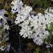 Pulchrocladia retipora - Photo (c) Anita363, μερικά δικαιώματα διατηρούνται (CC BY-NC), uploaded by Anita