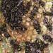 Metapolybia aztecoides - Photo (c) Peter Hollinger, algunos derechos reservados (CC BY-NC)