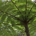 Cyathea caracasana - Photo (c) ob1963, some rights reserved (CC BY-NC)